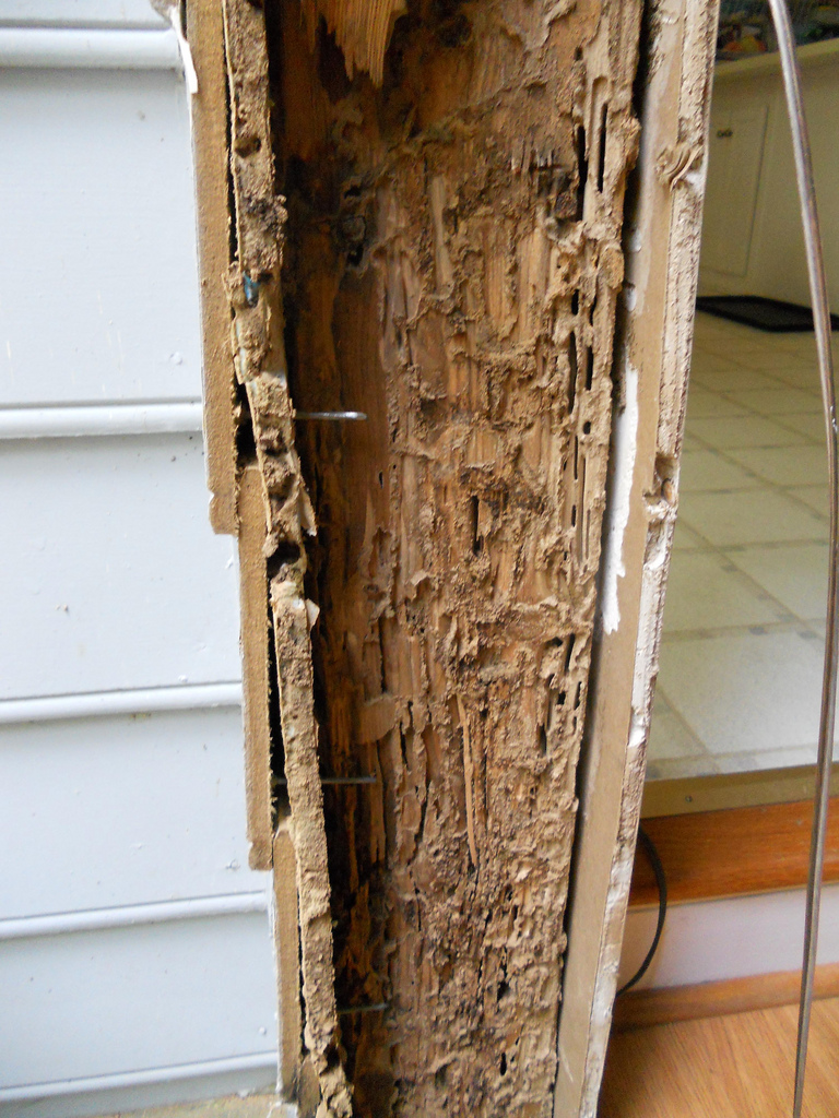 Termites In Home North Jersey Termite