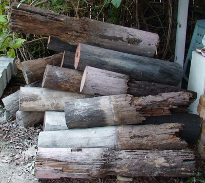 House Stumps Eaten by Termites