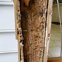 Damage from Termites in Home