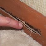 Termite Inspections - Termite Damage